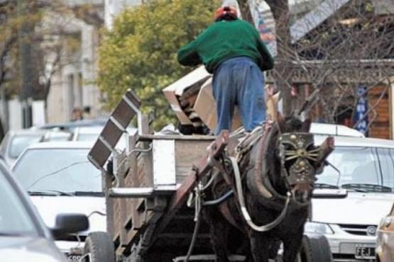 Erradican vehículos de tracción animal