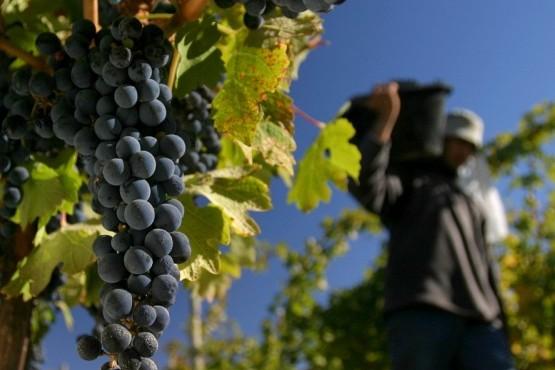 Vendimia 2018: preocupación por la alarmante situación que viven productores vitivinícolas