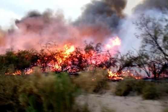 Declaran la emergencia agropecuaria en Mendoza por los incendios