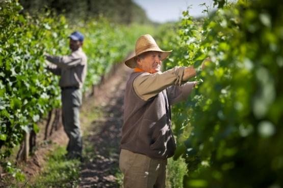 Sigue cayendo la rentabilidad para el productor vitivinícola