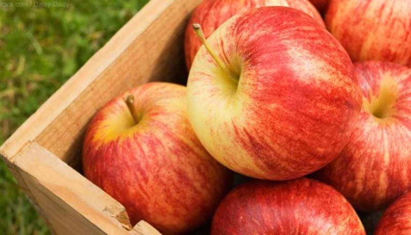 Empresa embarcó su primera carga de manzanas a Europa