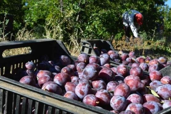 Vence el plazo para inscribirse en el Plan de Mejora Competitiva Frutícola