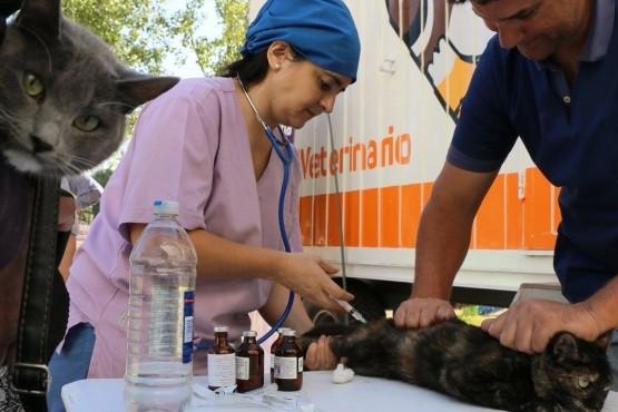 Campaña de esterilización y vacunación antirrábica