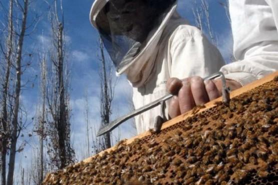 Línea de créditos para productores apícolas