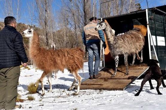 Se entregan los primeros animales del Programa de Adopción Responsable