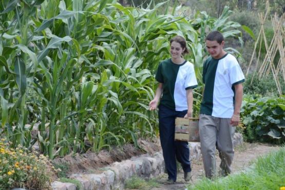 Enseñarán sobre cultivo, elaboración y consumo de quinua