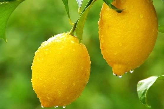 10 preguntas sobre limoneros