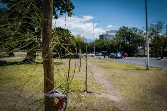 Importante reforestación en el Parque del Acceso Este