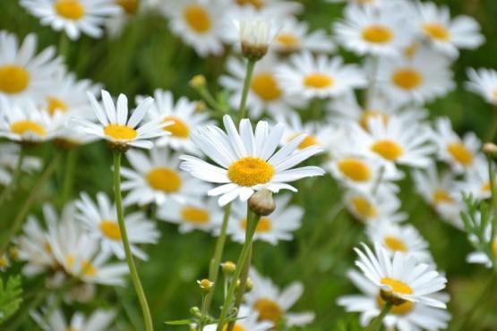 El Vivero de Guaymallén produjo 5.000 plantines florales