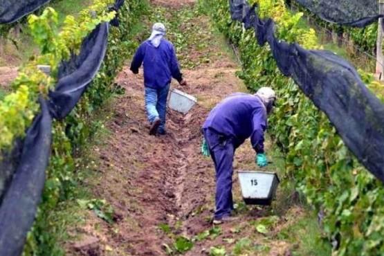 Financiamiento para cosecha vitivinícola