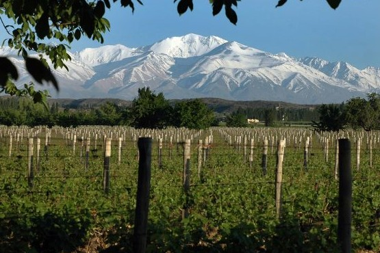 Valle de Uco con alta calidad enológica