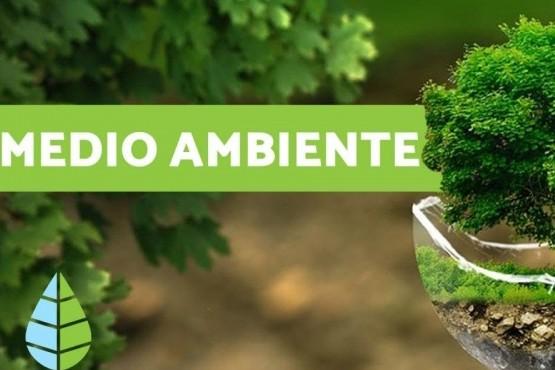 Seis cosas sobre el Medio Ambiente para saber según la ONU