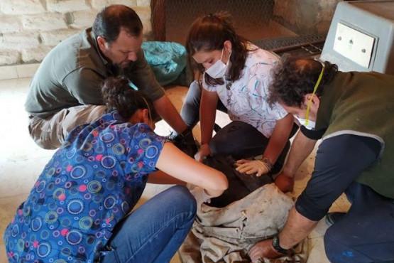 Una mendocina en la liberación de cóndores rescatados en la montaña.
