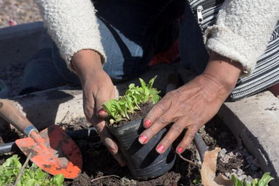 Entregan semillas para realizar una huerta en casa