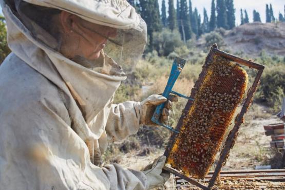 El rol de la mujer en la apicultura