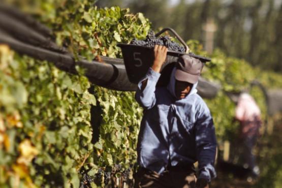 El Gobierno de Mendoza lanzará un operativo para financiar la cosecha y elaboración de uvas a valor producto y tasa 0%